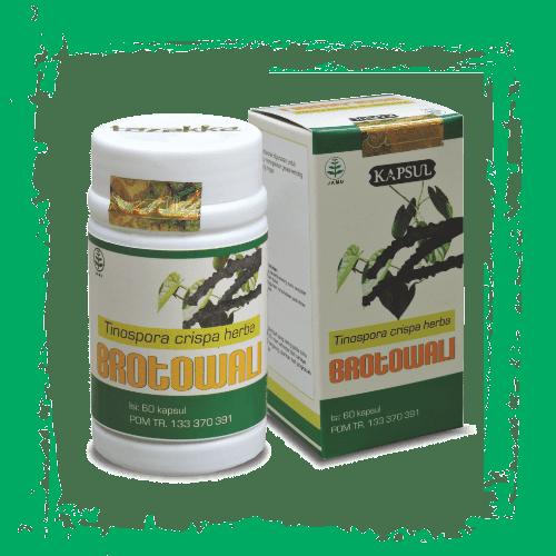 herbal kapsul ekstrak brotowali or brantawali